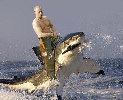 putin on a shark